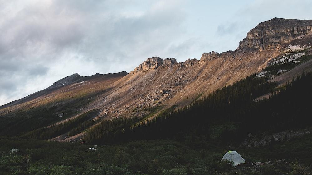 brown hilles