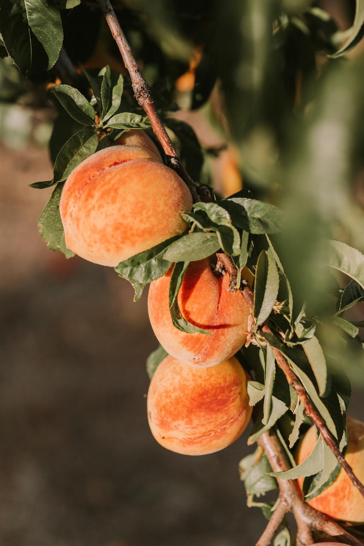 orange peach fruits