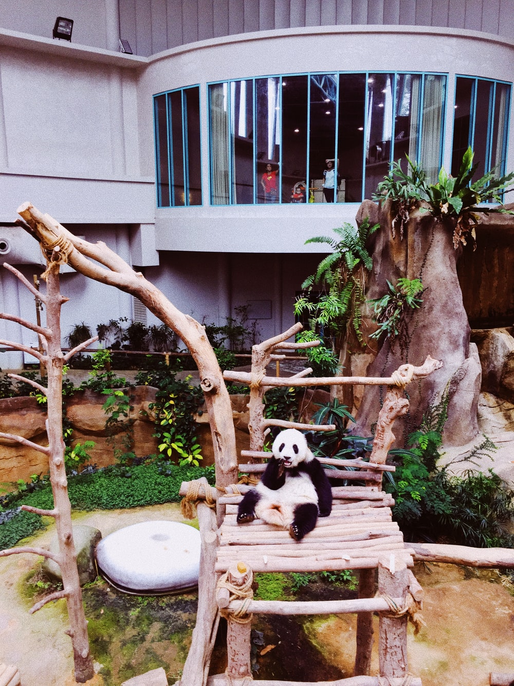 panda cub on wooden chair