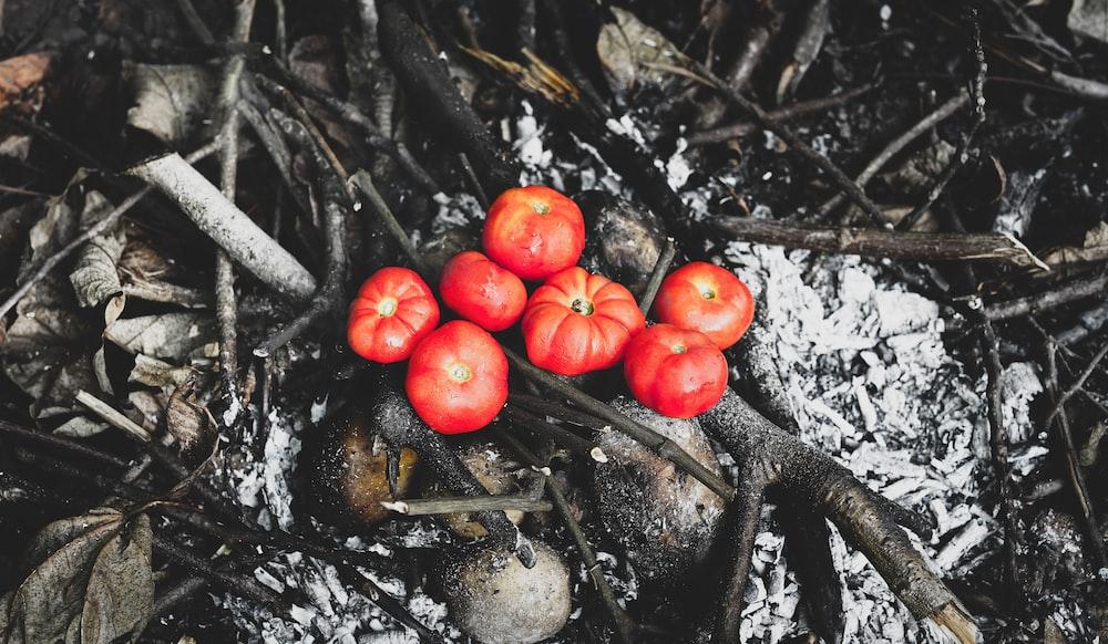 orange tomato fruits