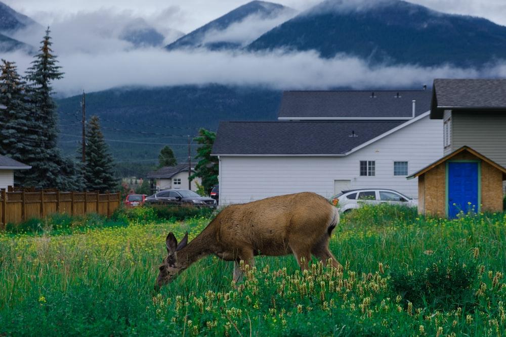 deer on green grass