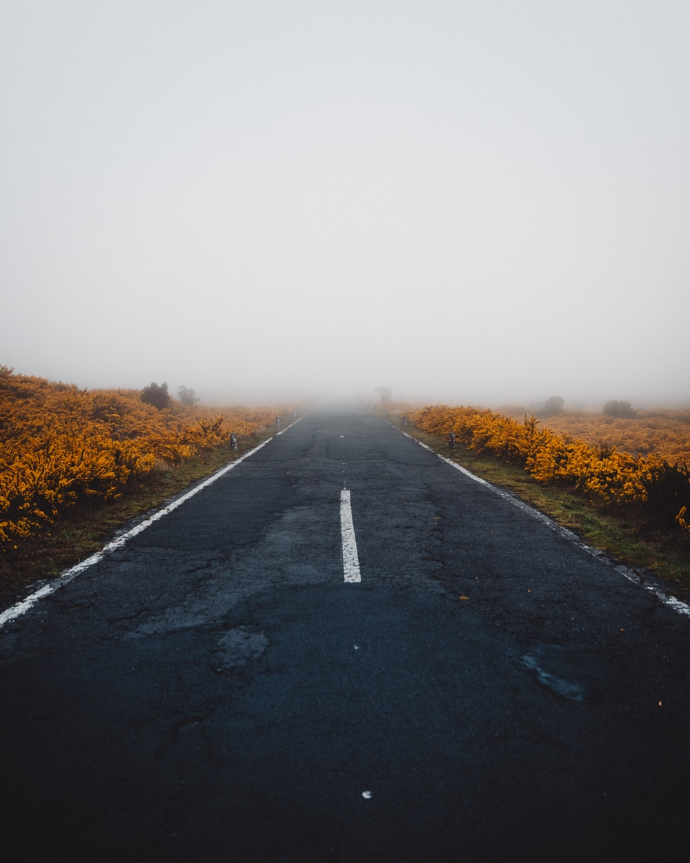 gray paved road under gray sky