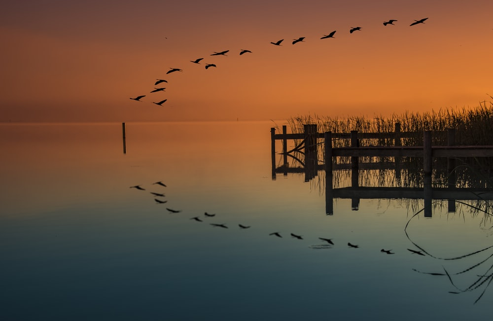 birds flying above dock and body of water