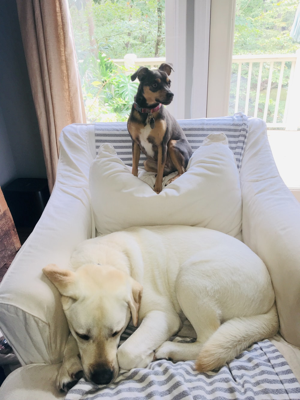 two dogs in a sofa armchair close-up photography