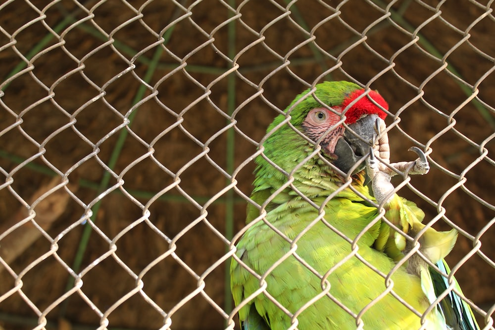 selective focus photography of green parrot near chainlink fence