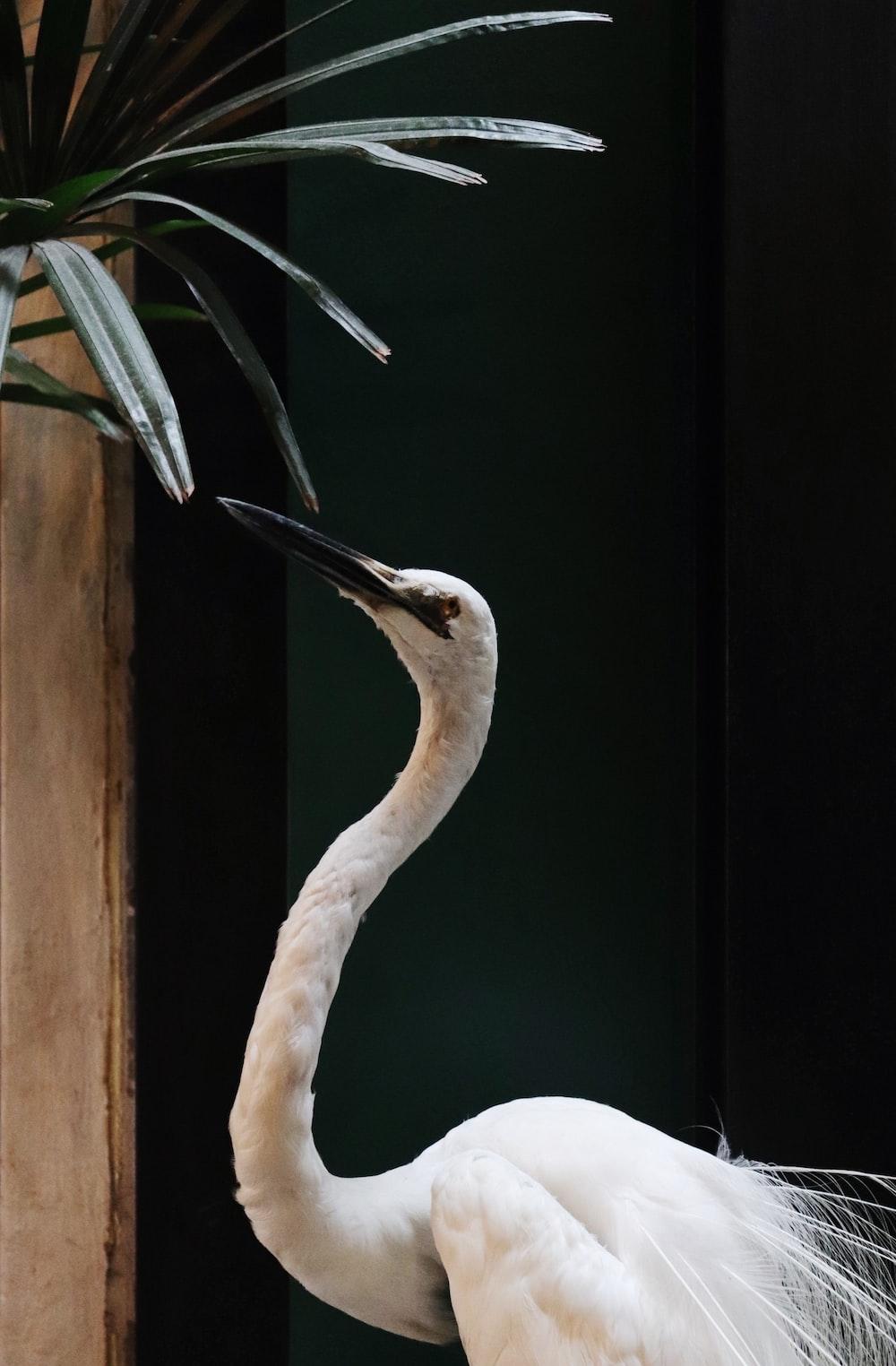 white bird close-up photography