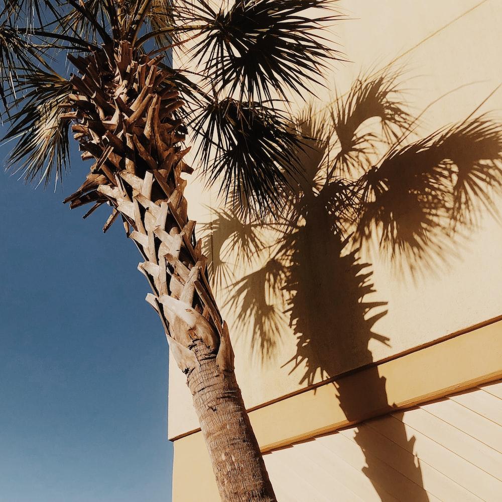 brown tree beside building
