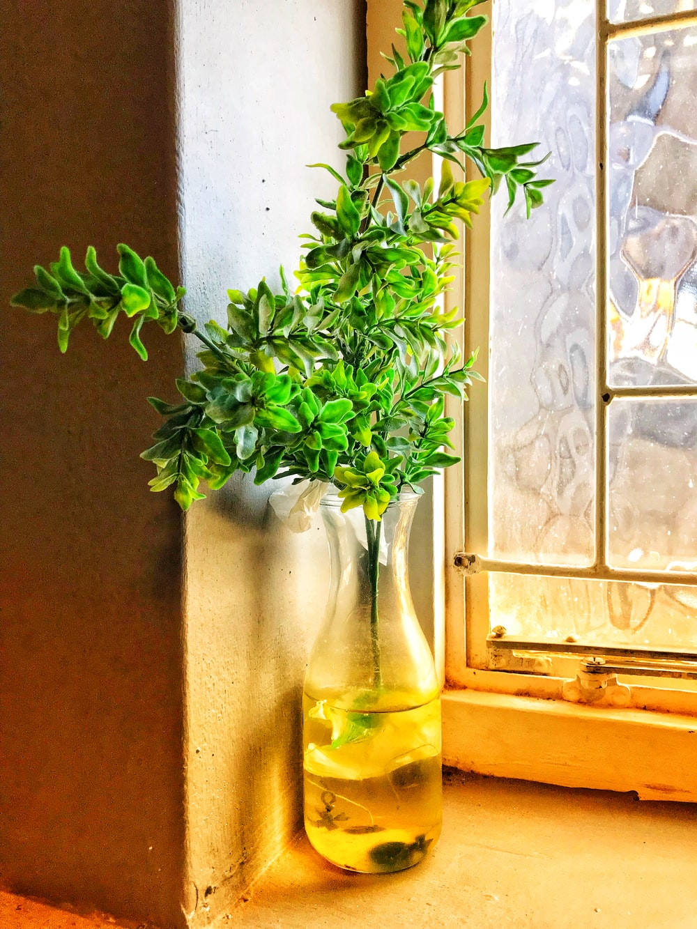 green-leafed plant with vase