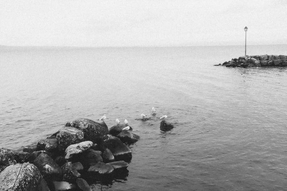 greyscale photography of rocks and body of water