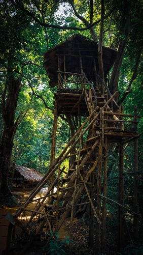 Treehouse in hill stations of Gavi