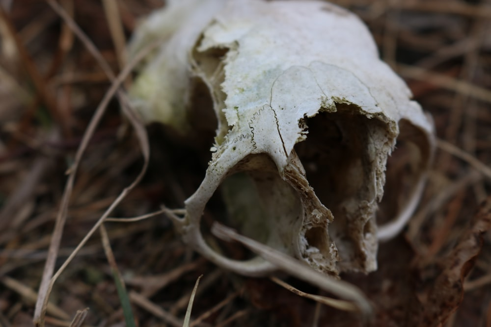 white skull macro photography