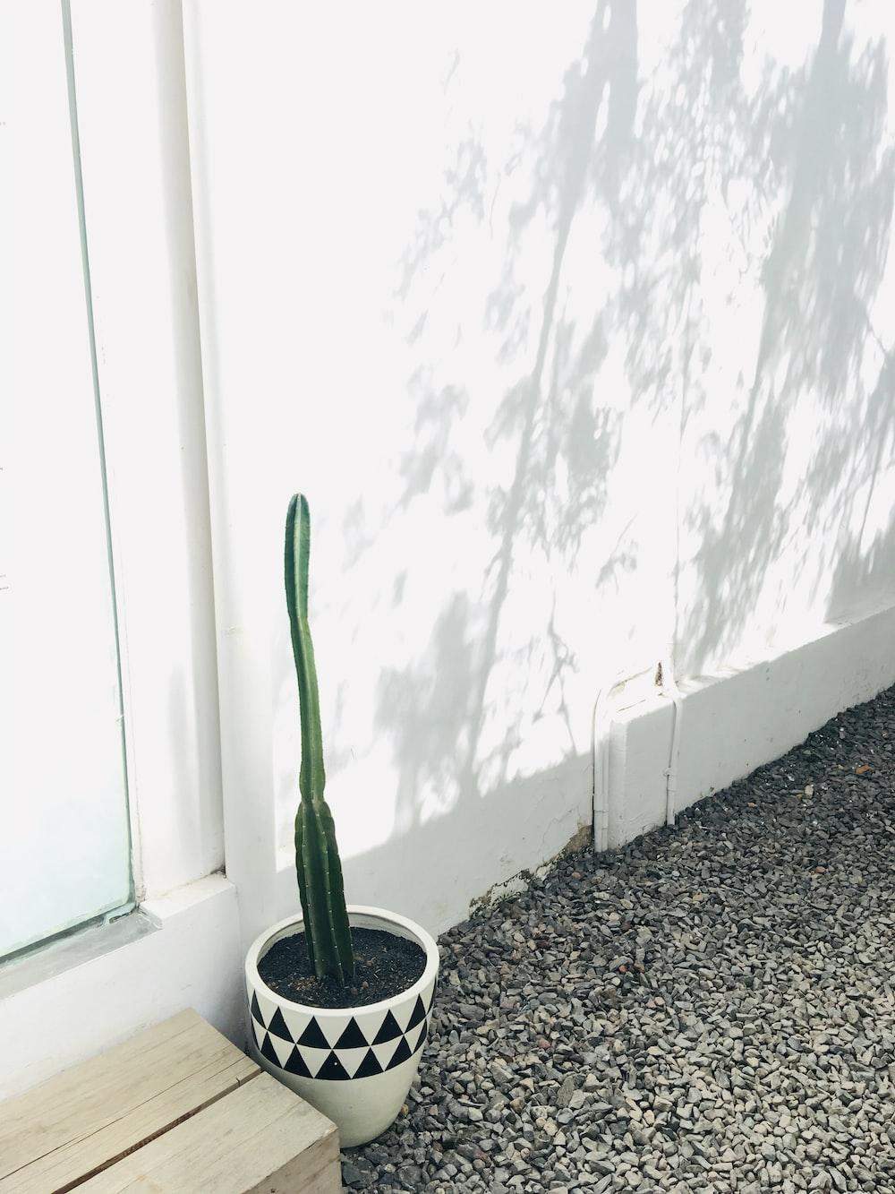 cactus plant in vase