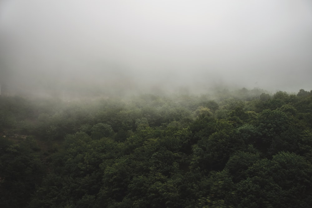 aerial photo of forest covered fog