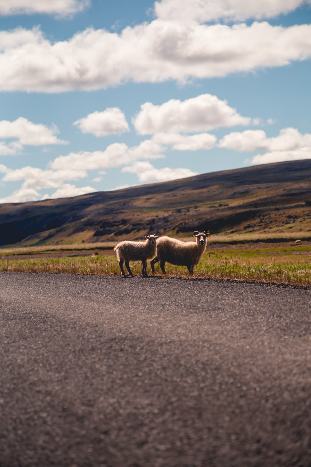 two white sheeps under white clouds and blue sky