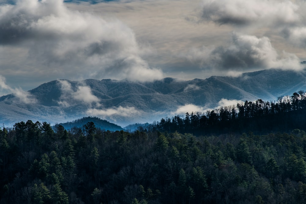 pine trees and foggy mountain scenery