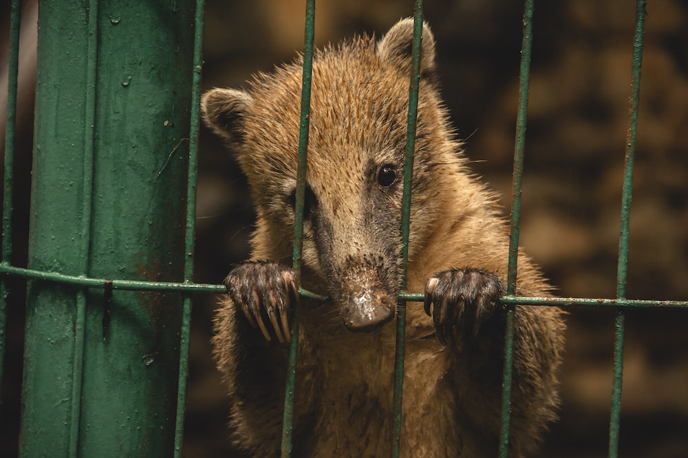 brown animal in cage