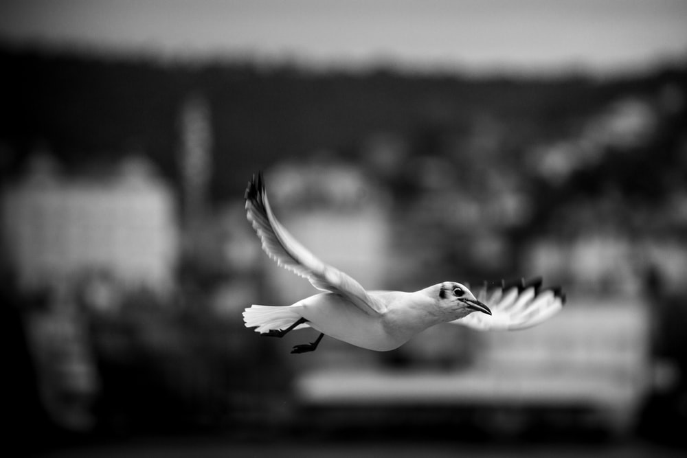 bird in mid air during day
