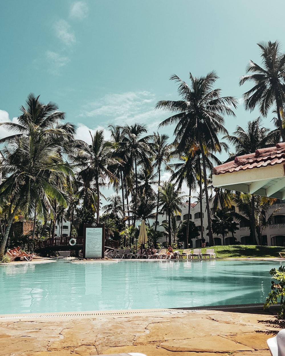 palm tree near pool