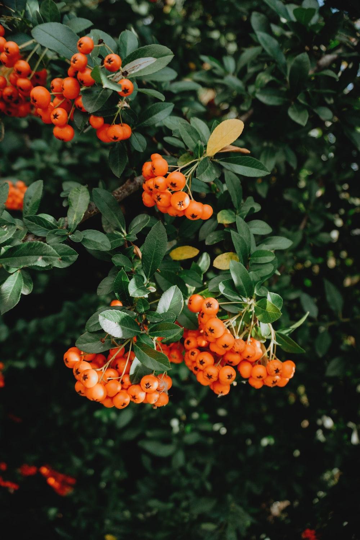 selective focus photography of orange plant berries