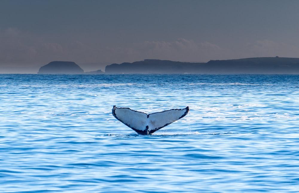 white whale's tale