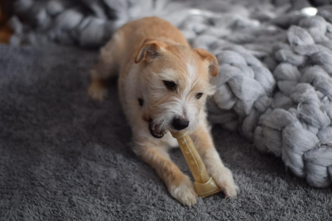 Knick knack Paddy Whack, give a dog a bone.