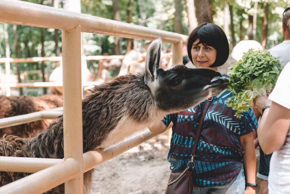 woman standing beside donkey