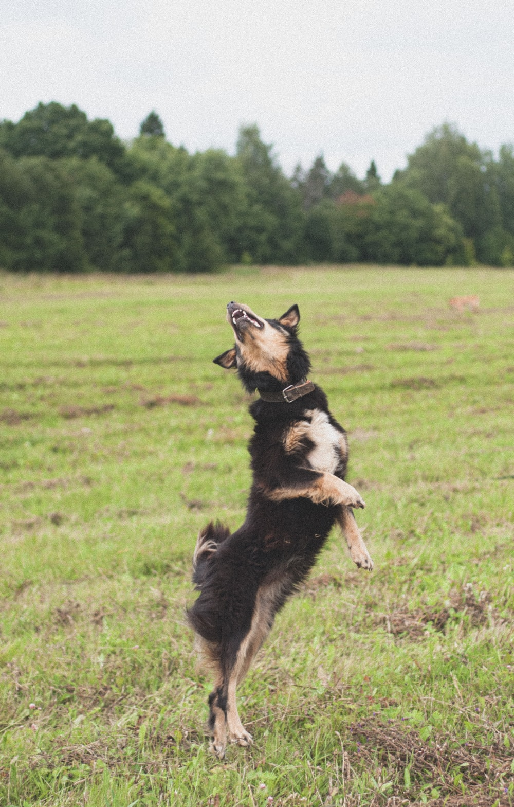 short-coated black and tan dog close-up photography