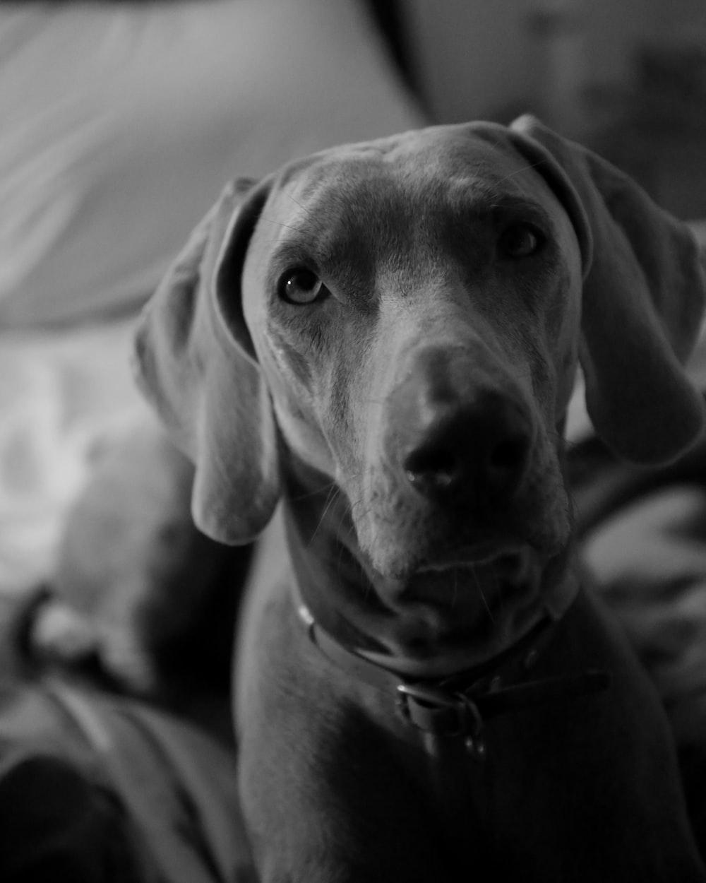 greyscale photo of dog