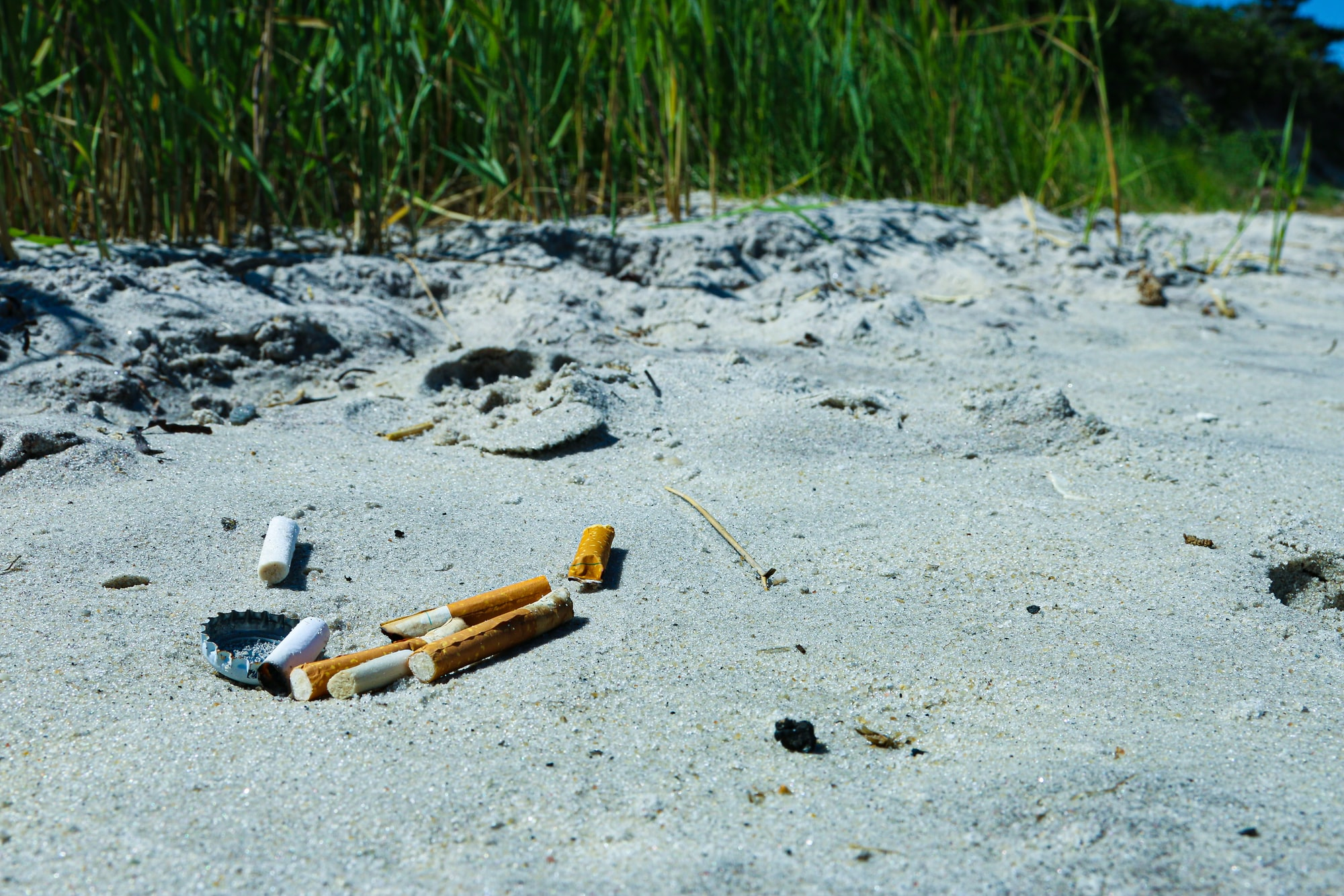 Cigarettes are bad for the planet