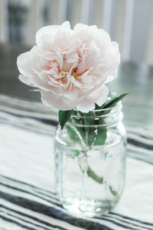 white-petaled flower on vase