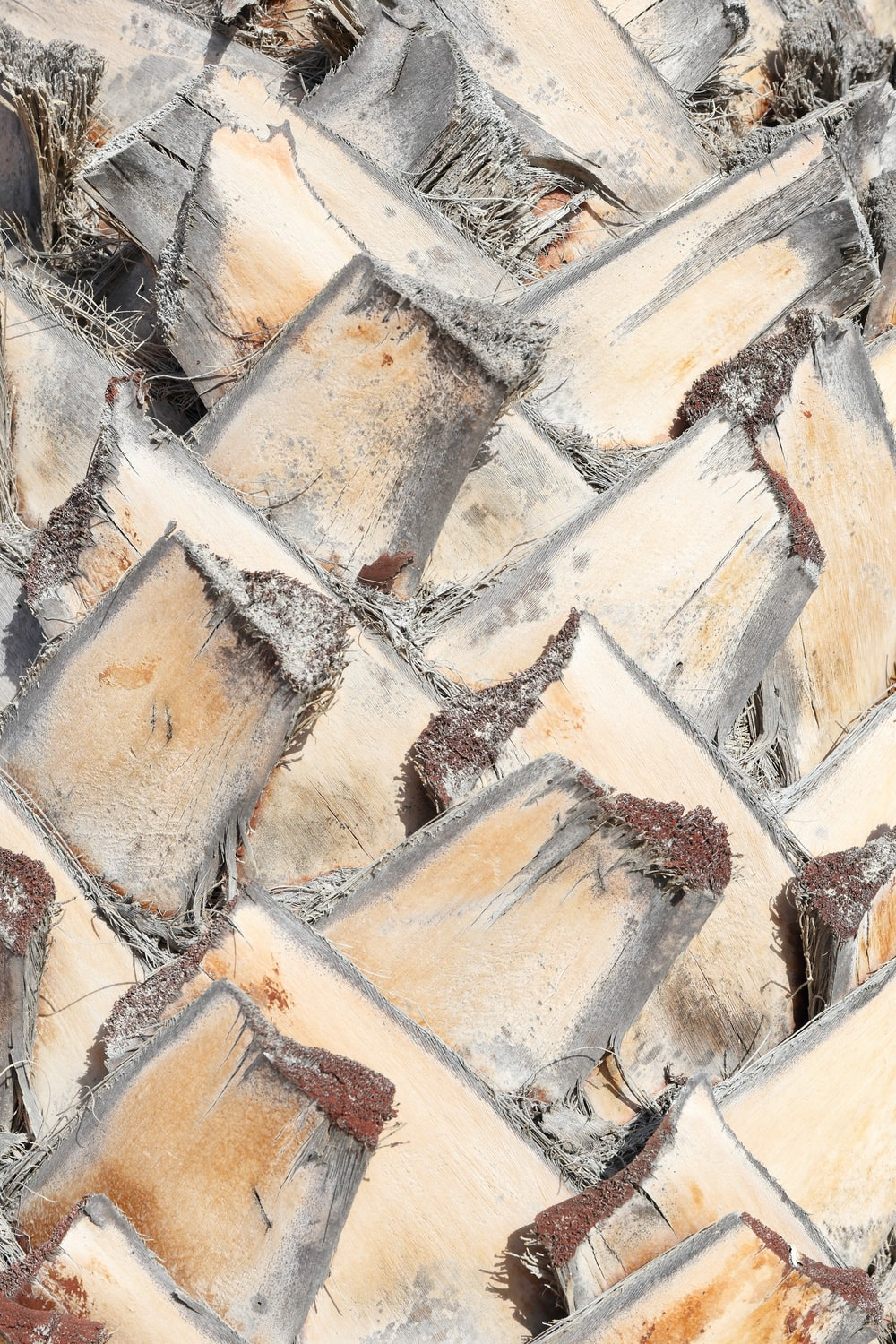 painting of a gray tree stump