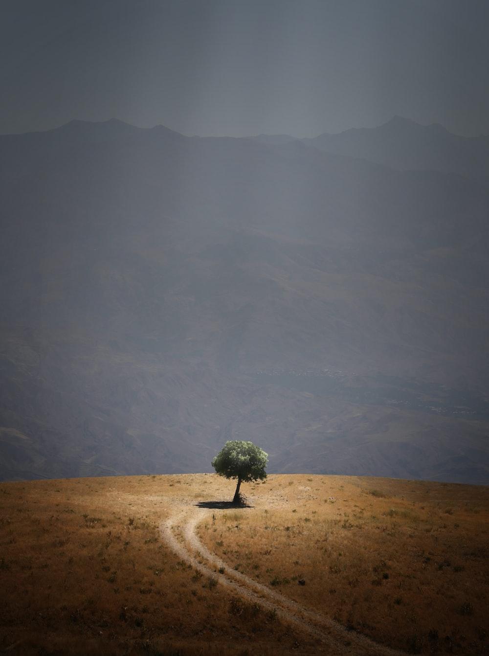 tree near pathway
