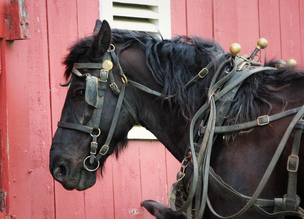 brown and black horse facing sideways
