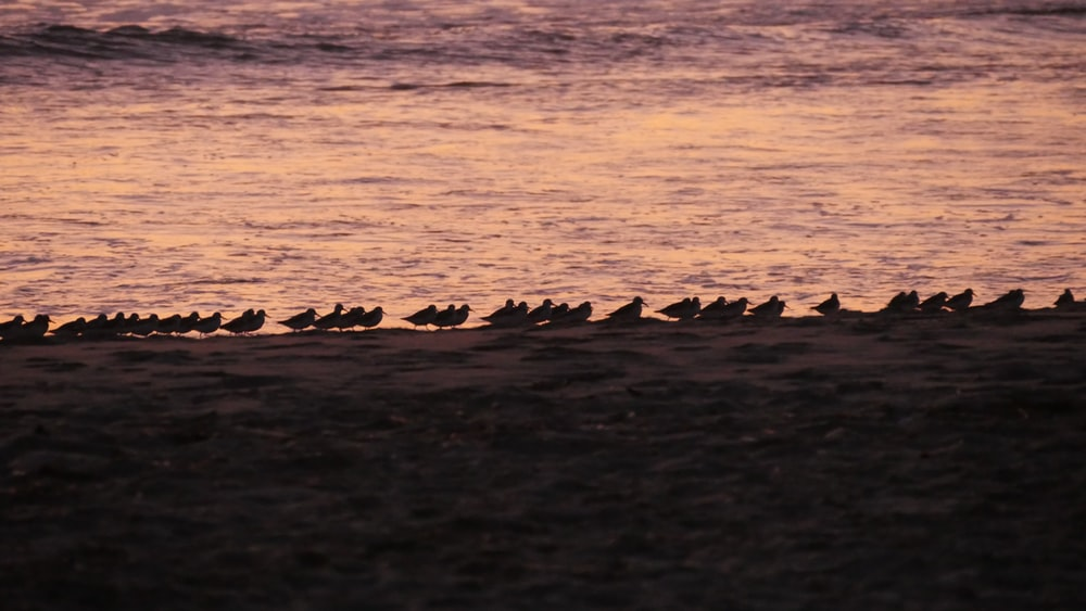silhouette of birds on shore