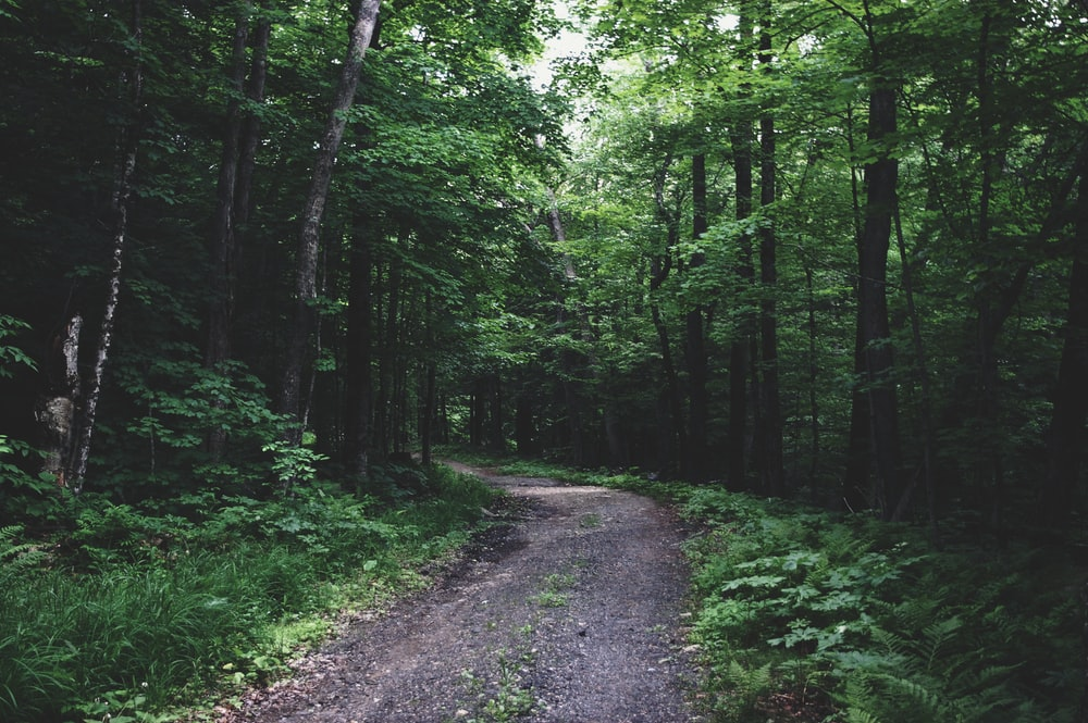 green forest pathway