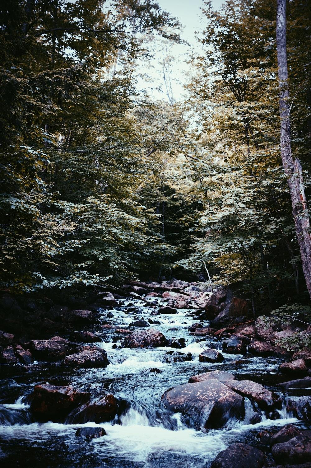 river in between trees