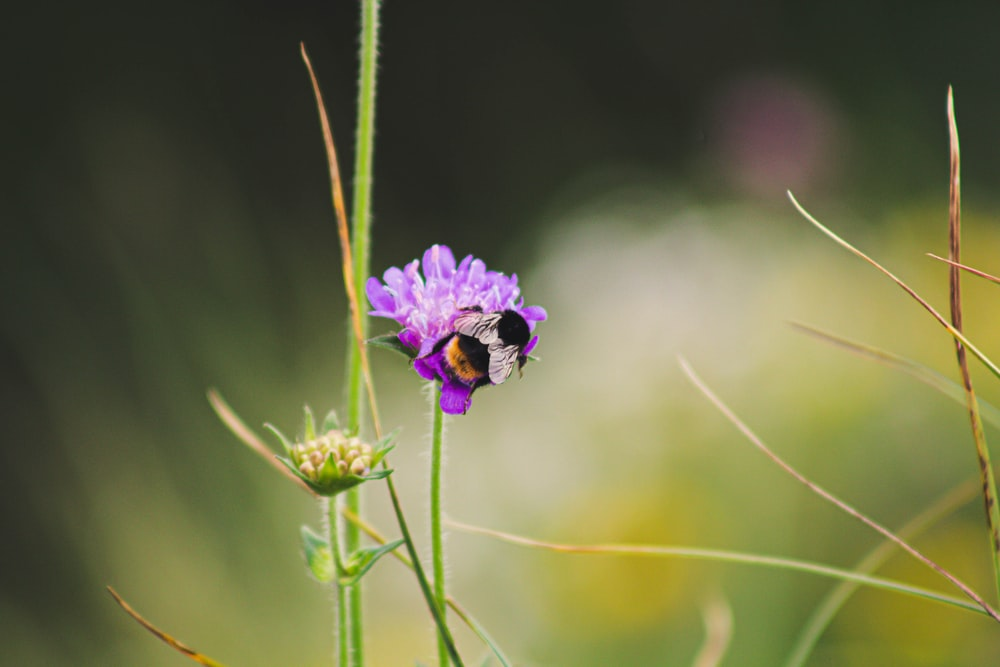 bee in purple flower close-up photography