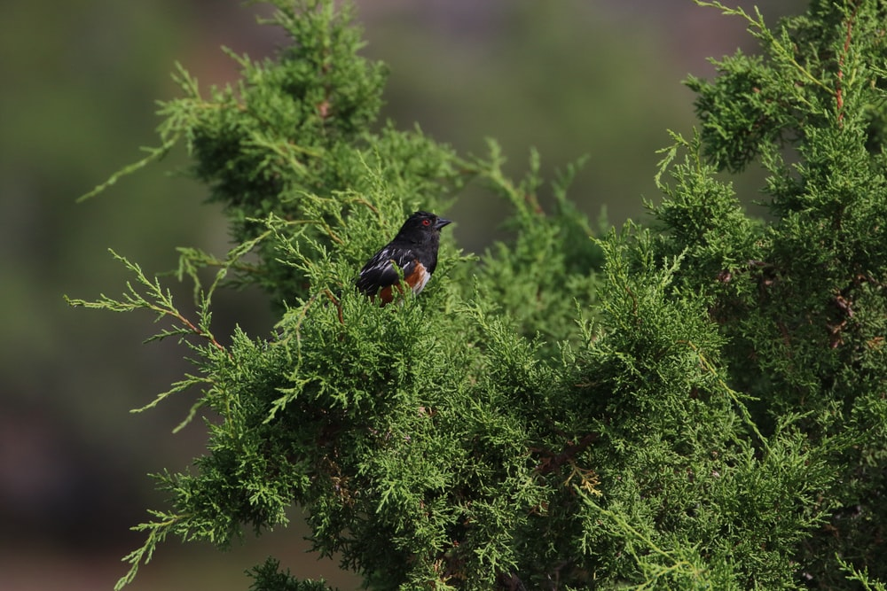 black bird in a green plant close-up photography