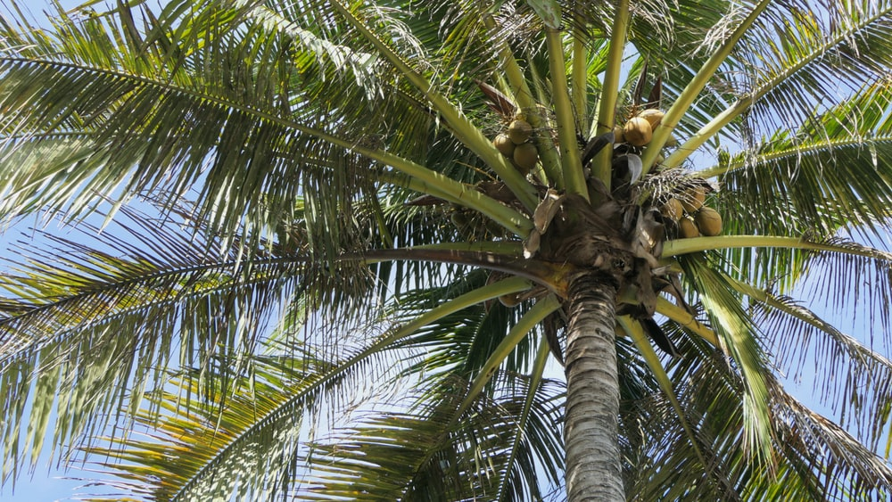 green and black coconut tree close-up photography