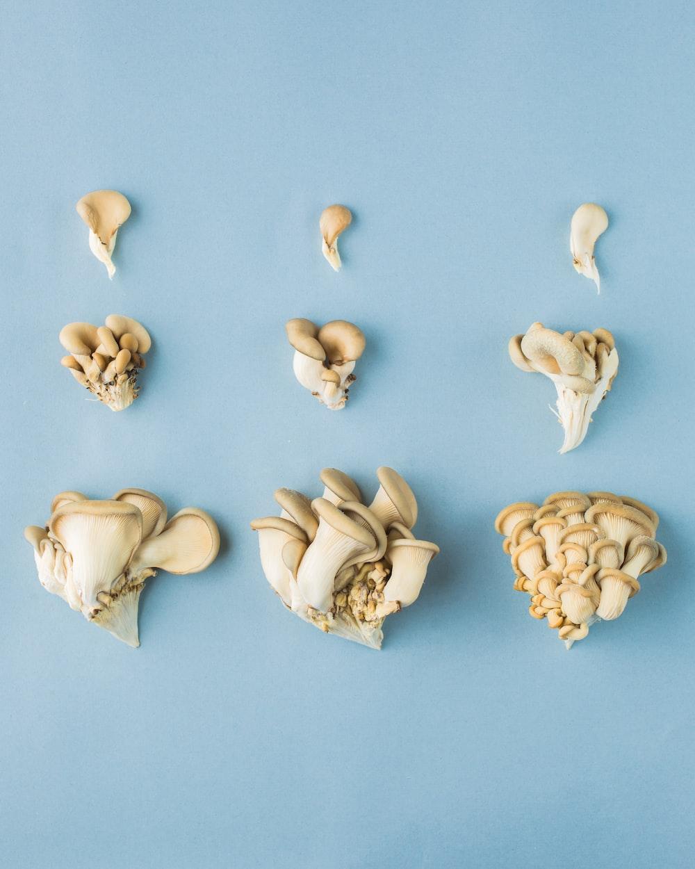 beige mushrooms