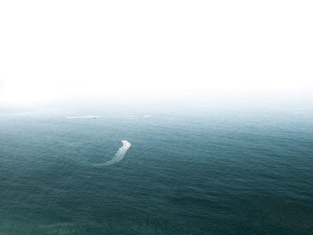 photo of white fish underwater