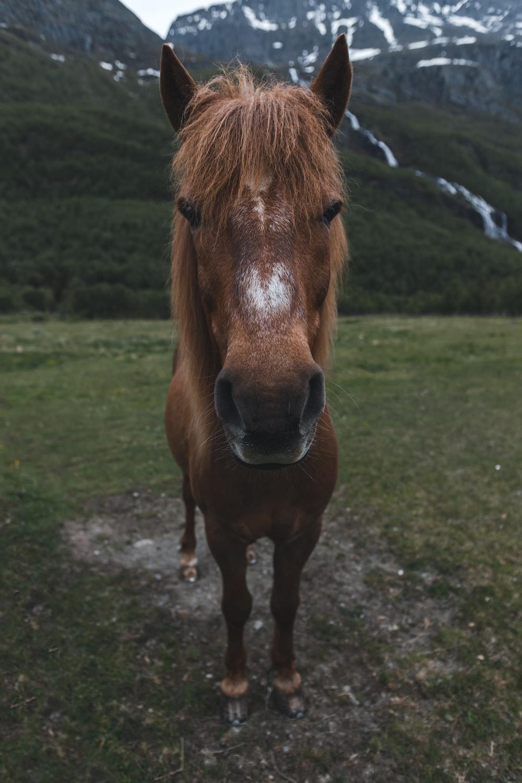 brown horse standing near mountain
