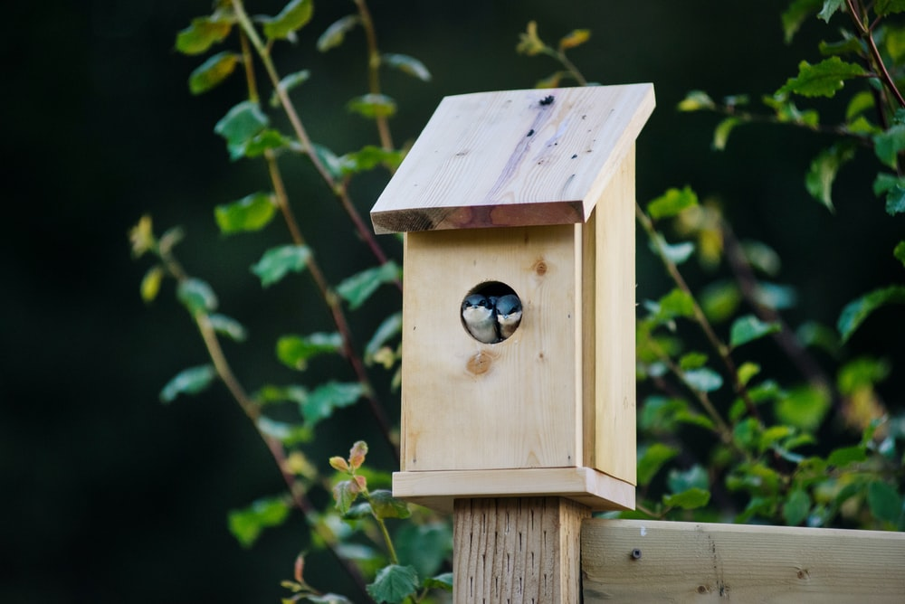 selective focus photo of brown and gray birdhouse