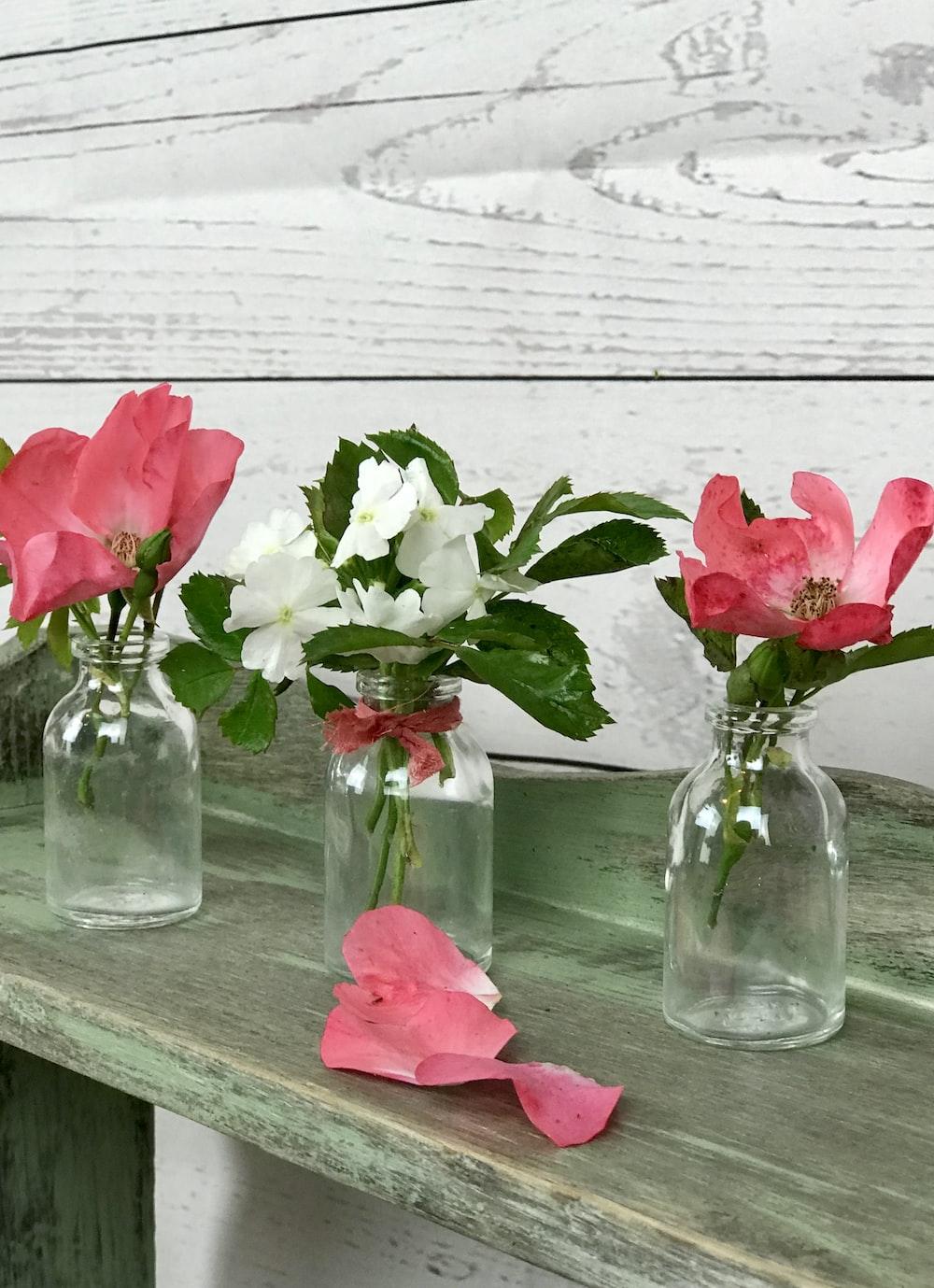 blooming pink rose flowers in vase
