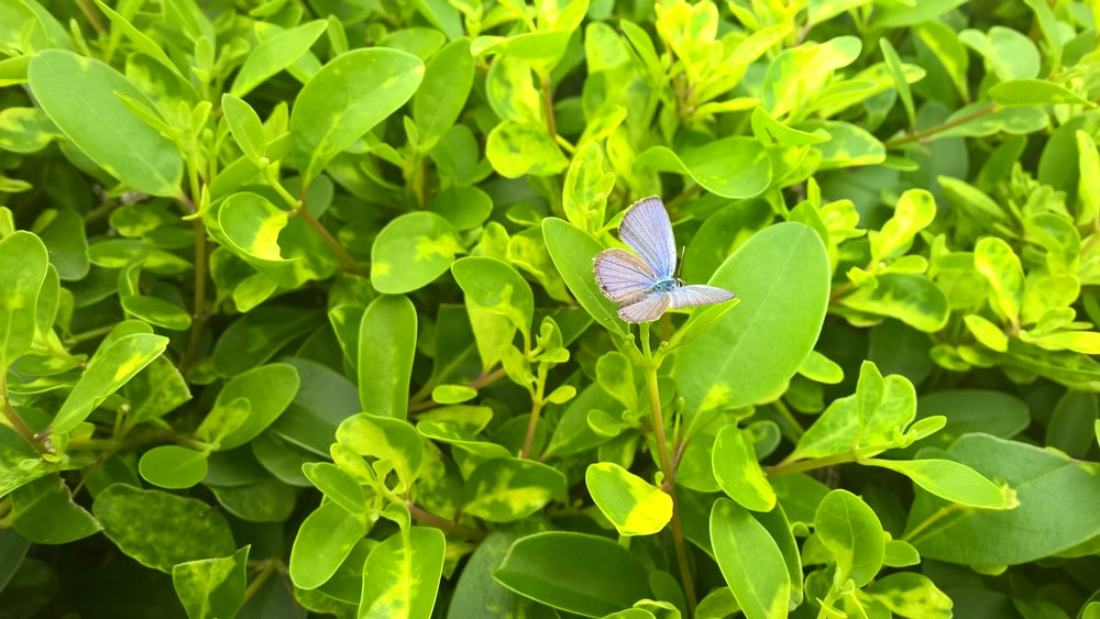 blue butterfly on green leafed plant