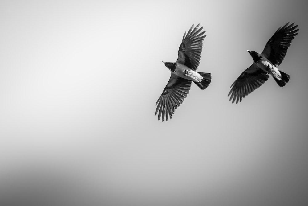 two black birds