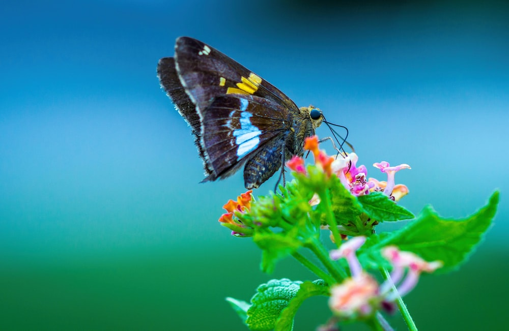 brow butterfly perching on flower