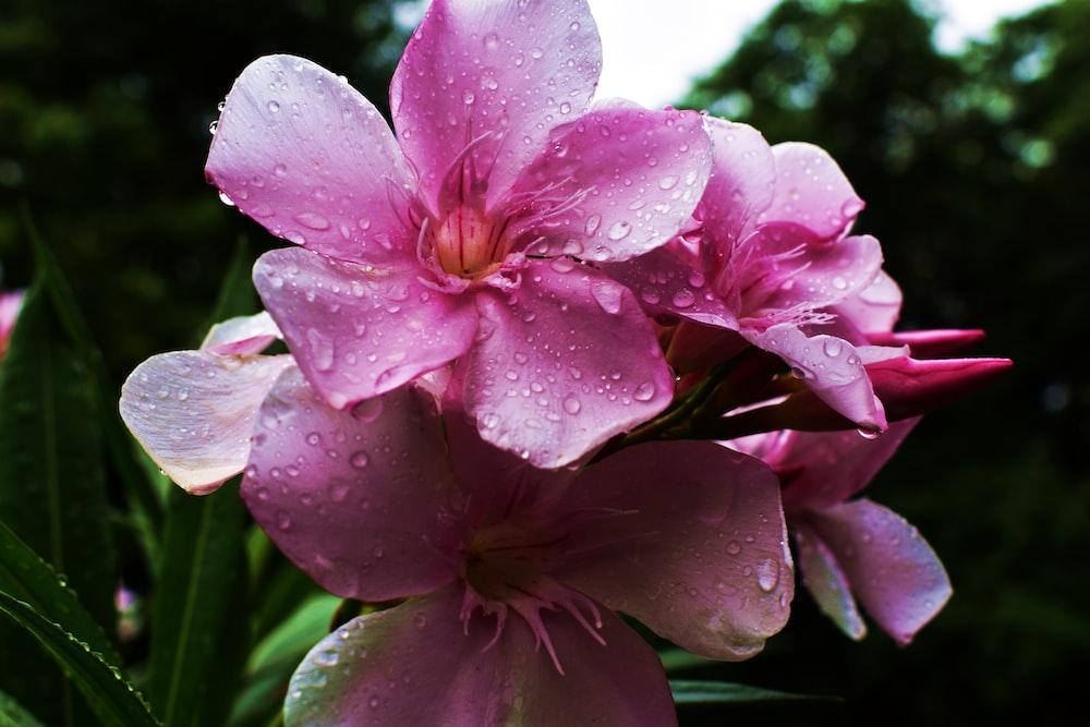 wet pink petaled flowers