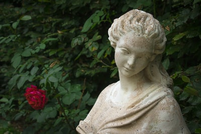 The young girl and the rose.