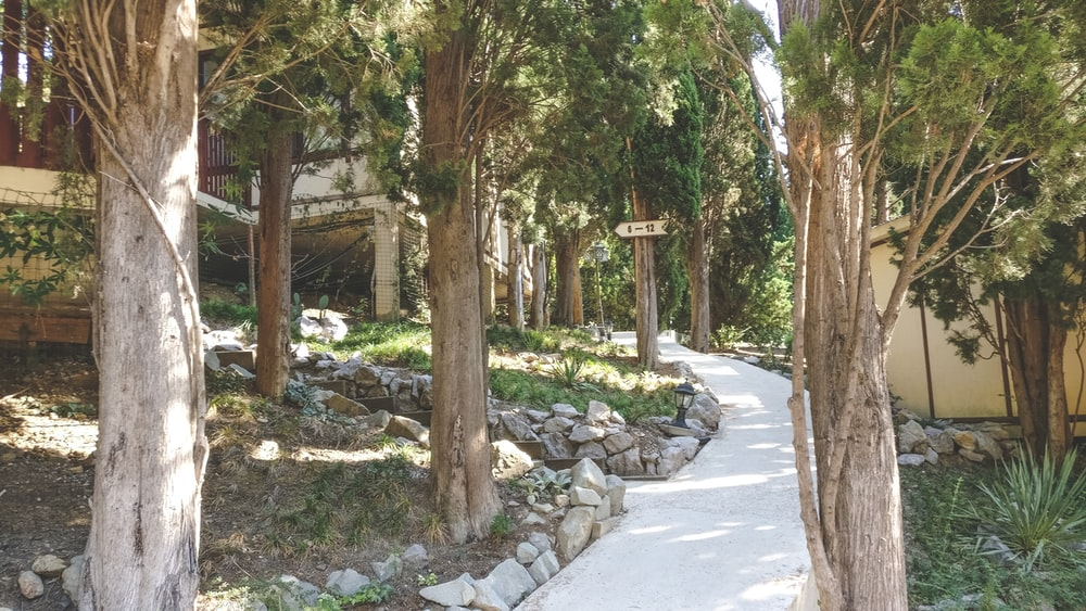 walkway surrounded by trees